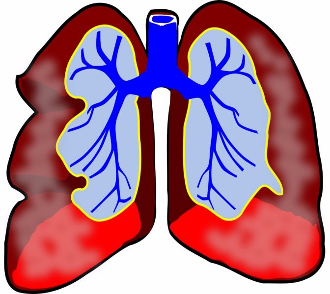zioła na płuca