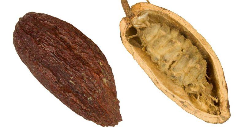 Właściwości kakao