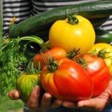dieta dr dąbrowskiej - warzywa i owoce
