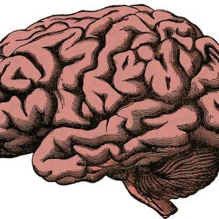 Naturalne sposoby na wspomaganie pracy mózgu - pamięć